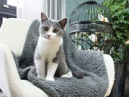 Extra Large Soft Cosy Warm Pet Dog Cat Animal Blanket Throw
