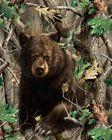 RealTree Fleece Throw Blanket with Bear in the Woods